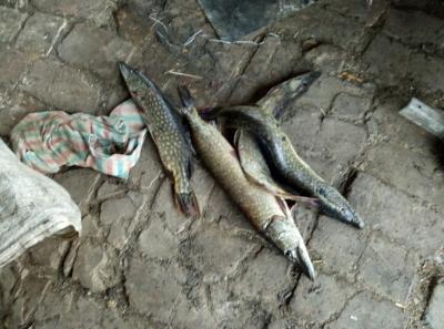 Протягом дня на Харківщині рибоохоронні патрульні вилучили 75 кг риби
