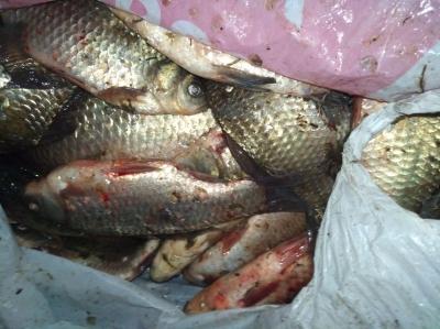 Протягом тижня вилучено понад 100 кг водних біоресурсів, - рибоохоронний патруль Харківщини
