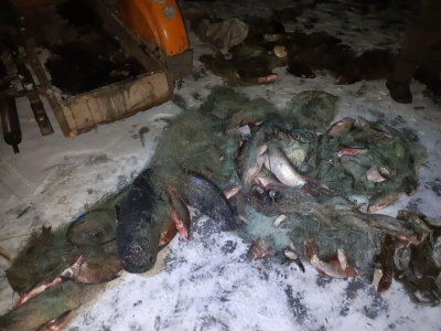 Рибоохоронці Харківщини на Червонооскільському водосховищі затримали порушника з 85 кг риби