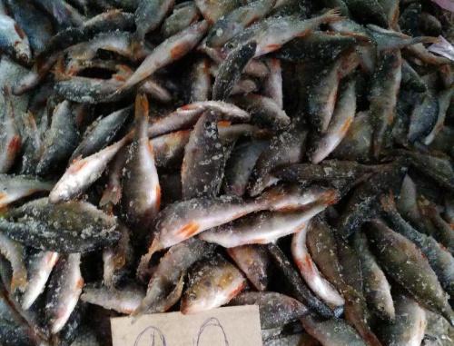 На ринках Харківщини конфісковано 43 кг незаконної риби