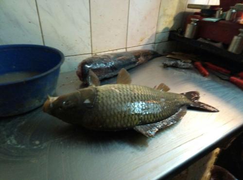 Харківський рибоохоронний патруль викрив порушень на понад 6 тис. грн за тиждень роботи