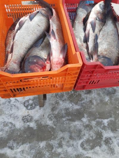 Протягом тижня вилучено майже 60 кг незаконно добутої риби