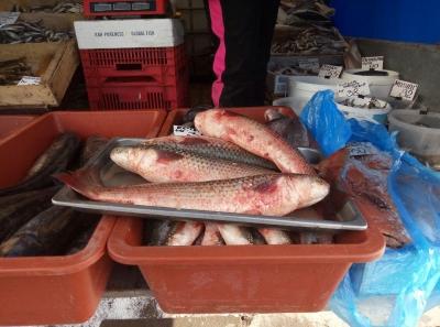 Рибпатрульні Харківщини вилучили 143 риби з незаконного обігу