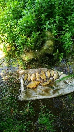 Порушник завдав близько 3 тис. грн збитків, - Харківський рибоохоронний патруль